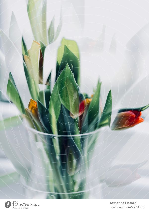 Tulips bouquet red green orange Art Work of art Nature Plant Flower Leaf Blossom Bouquet Blossoming Illuminate Beautiful Yellow Green Orange Red Turquoise White