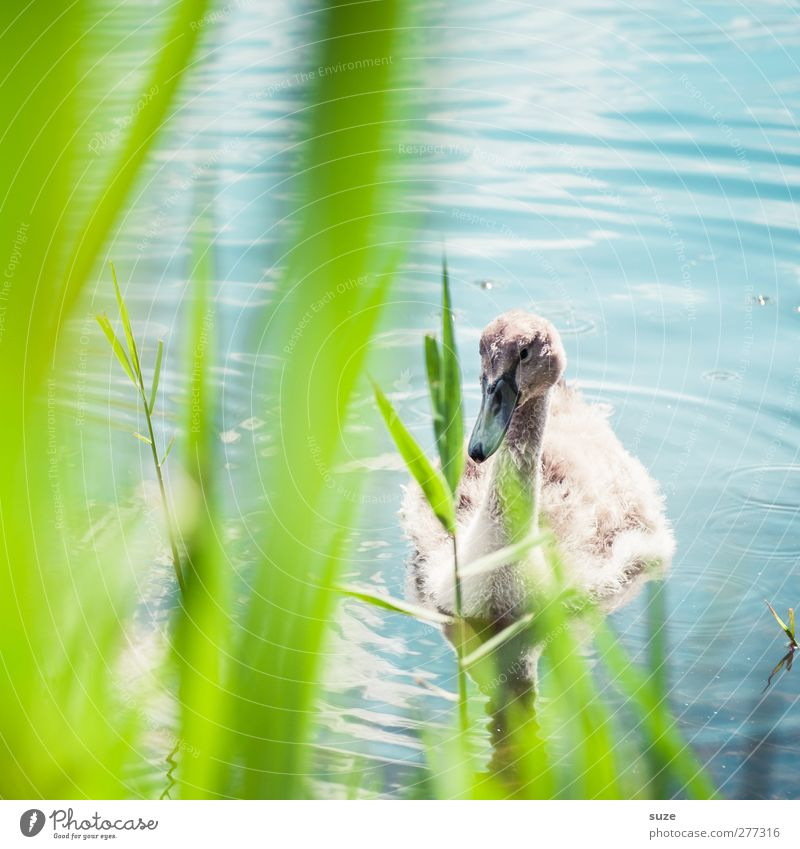 Nature Blue Green Beautiful Animal Environment Grass Baby animal Small Lake Head Bird Wild animal Feather Beautiful weather