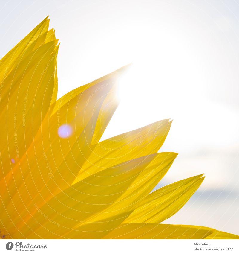 Sky Nature Vacation & Travel Summer Plant Sun Joy Far-off places Yellow Environment Happy Garden Dream Park Field Power
