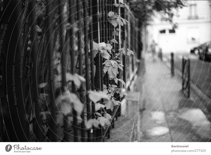 Human being Man City Beautiful Leaf Adults Street Bushes Sidewalk France Paris Conduct Lanes & trails Garden fence Front garden
