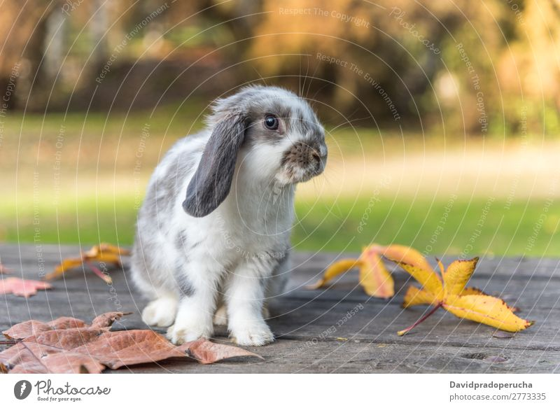rabbit,  bunny Hare & Rabbit & Bunny Rodent Grass Pet Leaf Youth (Young adults) Background picture White Cute Spring Green Fur coat Ear Beautiful Nature Small 1