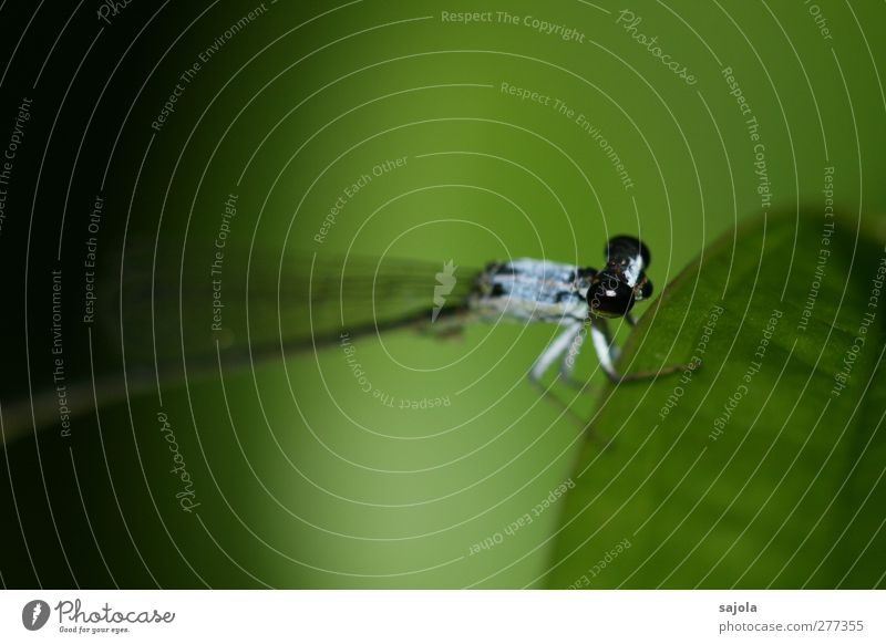 before departure Nature Animal Wild animal Insect Small dragonfly 1 To hold on Sit Wait Blue Green Black Colour photo Exterior shot Close-up
