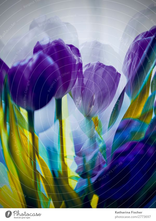 Flowers purple yellow tulips bouquet of flowers Art Work of art Nature Plant Spring Summer Autumn Tulip Leaf Blossom Bouquet Blossoming Illuminate Exceptional