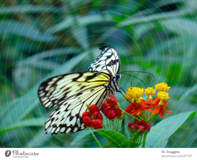 butterflies Butterfly Insect Animal Flying animal Blossom Suck Yellow Red Transport Wing Necktar