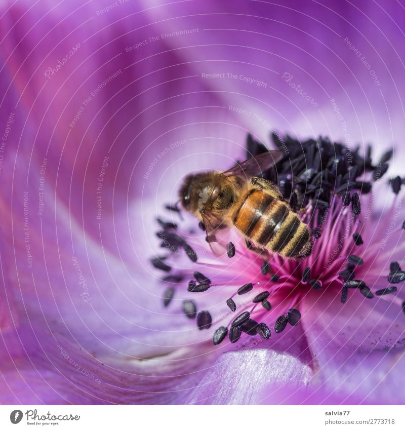 Bee in a paradise of flowers Macro (Extreme close-up) Copy Space top Copy Space left Shallow depth of field Deserted Colour photo Exterior shot Plant Blossom