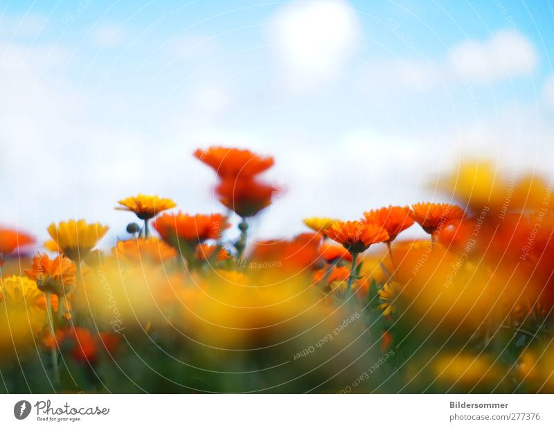 Sky Nature Vacation & Travel Plant Blue Green Beautiful Summer Flower Landscape Clouds Yellow Spring Meadow Freedom Orange