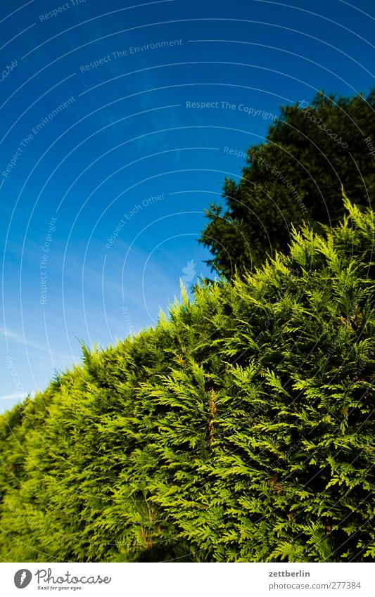 Sky Nature Summer Tree Garden Weather Beautiful weather Border Copy Space Treetop Cloudless sky Garden plot Neighbor Hedge Real estate Conifer