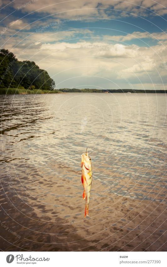 There hangs a perch Leisure and hobbies Fishing (Angle) Vacation & Travel Environment Nature Air Water Horizon Lakeside Animal Wild animal 1 Hang Spoon bait