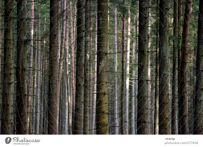 Nature Summer Tree Forest Environment Dark Autumn Moody Climate Hiking Trip Tree trunk Climate change Orientation