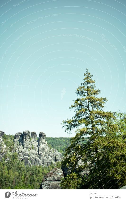 Ännschen, please. Far-off places Freedom Mountain Environment Nature Landscape Plant Sky Cloudless sky Climate Beautiful weather Tree Rock Growth Authentic Wild