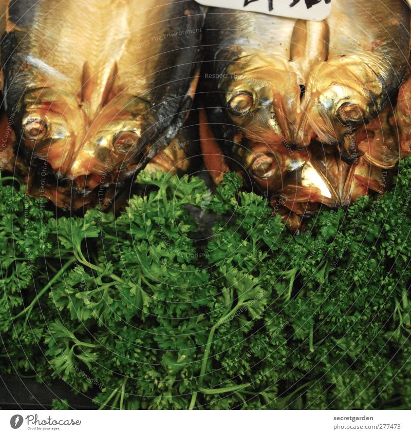 here it smells a little fishy... Food Fish Nutrition Buffet Brunch Banquet Restaurant Plant Foliage plant Animal Dead animal Fragrance Fresh Brown Green Parsley