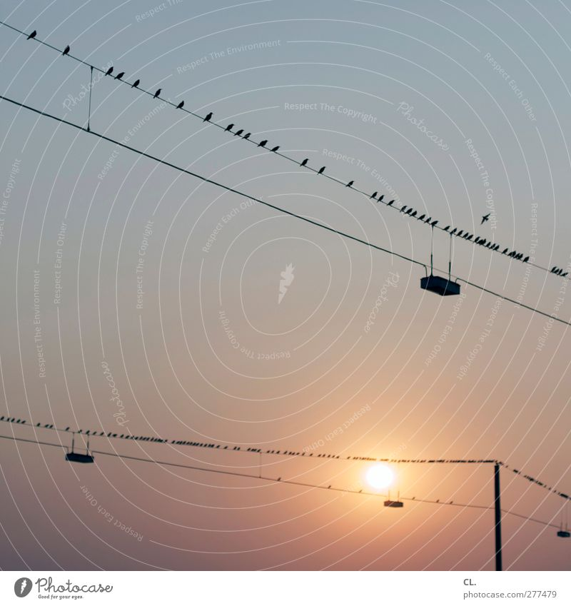 167 Environment Nature Sky Sky only Cloudless sky Sun Sunrise Sunset Summer Weather Beautiful weather Warmth Animal Bird Group of animals Flock Flying Sit Wait