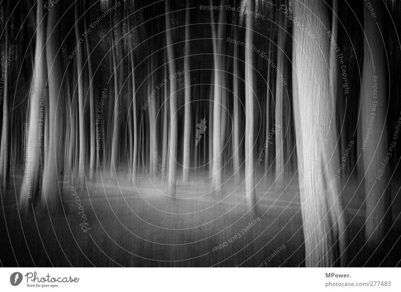 spooky trees Plant Tree Forest Virgin forest Trashy Crazy Black Dream Fear Movement Chaos Enchanted forest Blur Tree trunk Lanes & trails Woodground Mystic