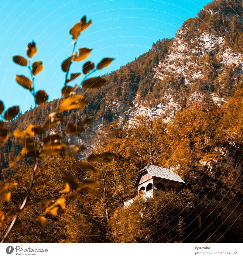 Hut in the mountains Nature Mountain House (Residential Structure) Wooden hut vantage point Hiking Landscape trees Moody detail good weather Warm light covert