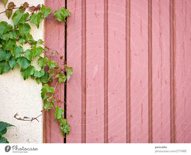 Green Plant Leaf Wall (building) Wall (barrier) Wood Background picture Pink Facade Idyll Copy Space Idea Violet Serene Nostalgia Cuddly