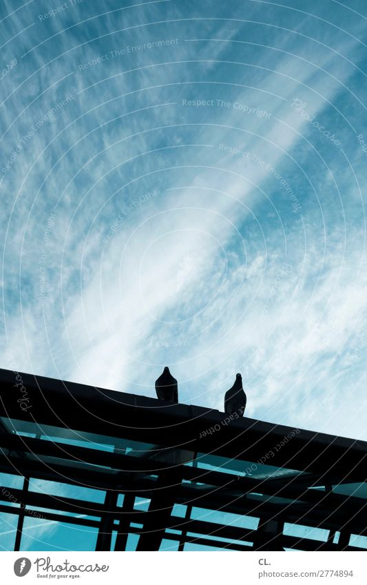 two pigeons Sky Clouds Beautiful weather Town Manmade structures Building Architecture Roof Animal Wild animal Bird Pigeon 2 Sit Blue Black Colour photo