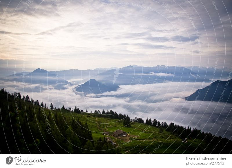 Vacation & Travel Tree Clouds Calm Forest Relaxation Landscape Far-off places Mountain Freedom Fog Beautiful weather Alps Peak Summer vacation Haze