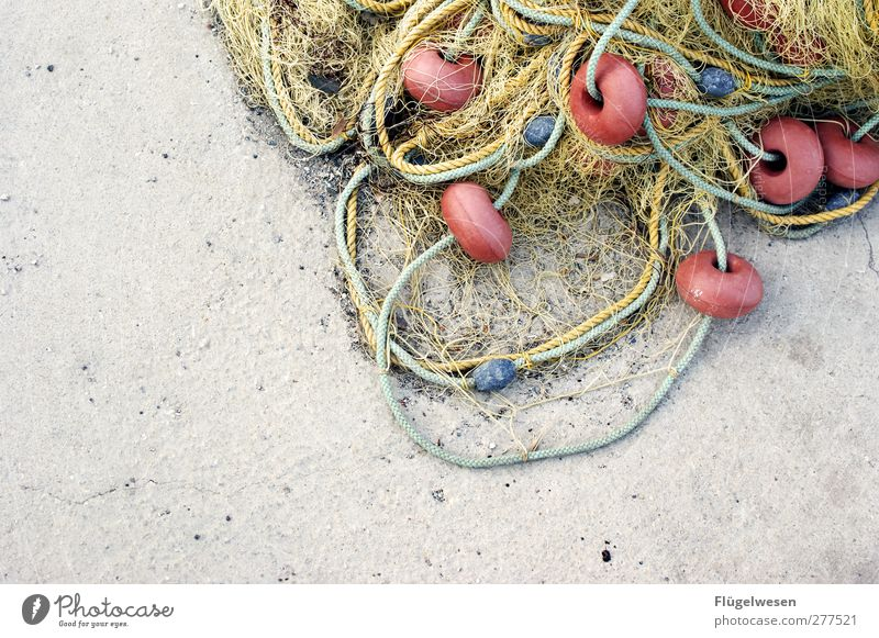 New day new happiness Fishery Fishing net Colour photo Exterior shot Day Copy Space left Section of image