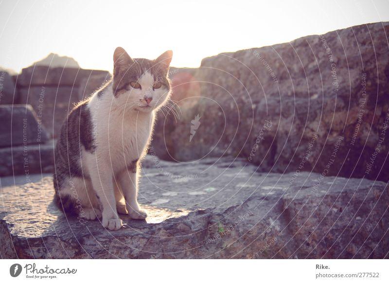 Just a minute. Environment Sun Summer Wall (barrier) Wall (building) Facade Animal Pet Cat 1 Stone Observe Relaxation Sit Threat Free Beautiful Astute Cute
