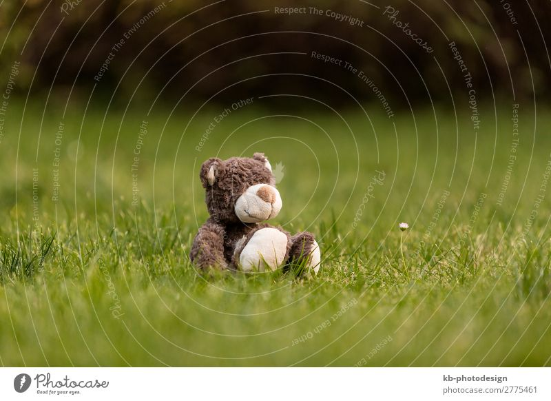 Brown teddy bear in the garden Garden Meadow Toys Teddy bear Cuddly toy Playing brown natural forest Colour photo Exterior shot Day