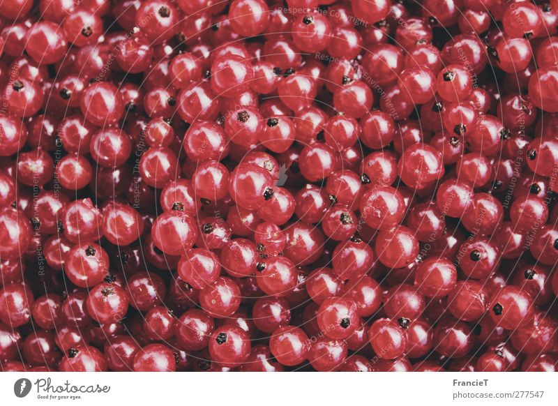 Nature Summer Red Colour Small Garden Healthy Fruit Food Glittering Fresh Nutrition Sweet Many Round Pure