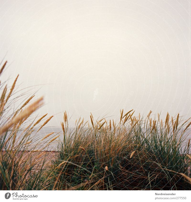 Nature Plant Ocean Beach Landscape Coast Moody Rain Climate Fog Idyll Baltic Sea Dune Bad weather Marram grass Warm light