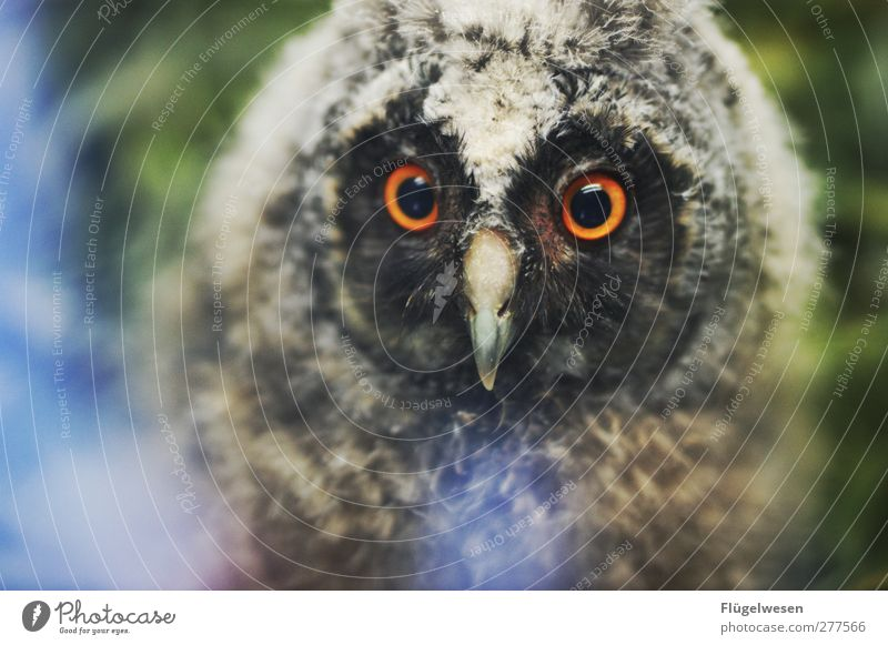 Animal Eyes Baby animal Power Wild animal Wing Animal face Zoo Exotic Feeding Claw Owl birds Petting zoo Eagle owl