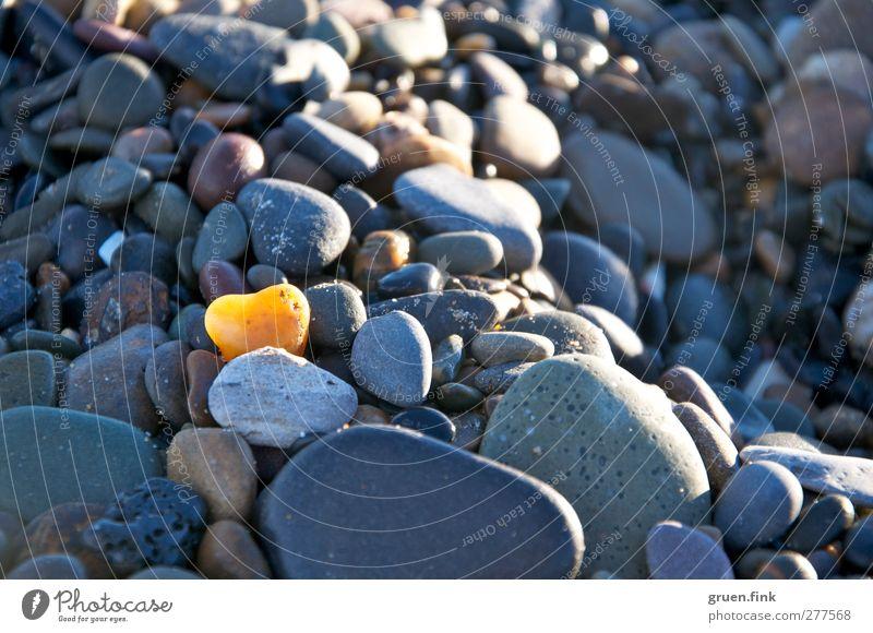 Heart of stone Beach Coast Stone Yellow Gray Colour photo Exterior shot Close-up Shallow depth of field