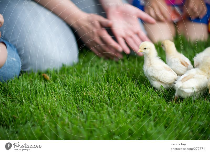 Human being Child Hand Summer Girl Animal Meadow Grass Boy (child) Baby animal Infancy Leisure and hobbies Group of animals Group of children Agriculture Farm