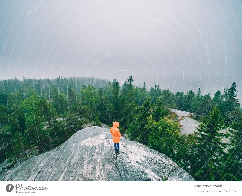 Tourist on rock exploring views of woods Human being traveler Nature Fog Forest Wilderness Mysterious Evergreen tranquil Rock exploration Tourism Idyll