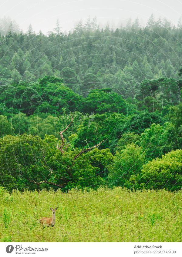 Green mixed woods Forest Lush Deer Landscape Natural Wilderness