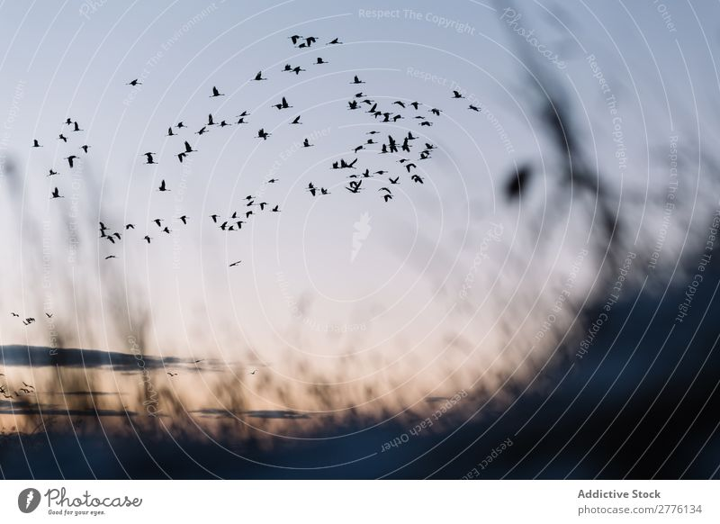 Black birds on blue sky Sky Bird Freedom wildlife in motion Flying Silhouette Flock Nature Peace Beautiful Dramatic Bright Sunlight Story Peaceful Group