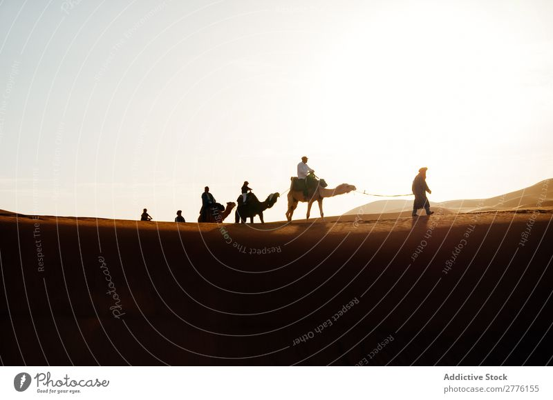 Caravan walking in desert Camel Desert Walking Human being Vacation & Travel Tourism Nature Africa Trip African Sand Animal Silhouette Sun Summer Landscape