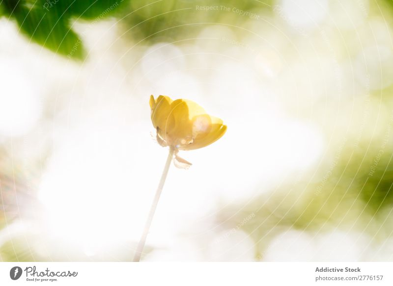 Small flower in sunlight Flower Sunlight Spring Nature Green Beautiful Summer Plant Yellow Beauty Photography pretty Colour Environment Sunbeam Floral Fresh