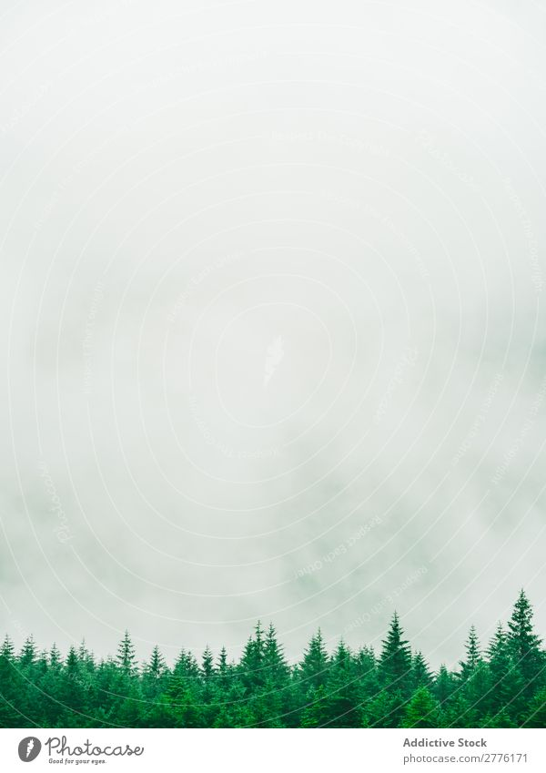 Fog running above tops of trees - a Royalty Free Stock Photo