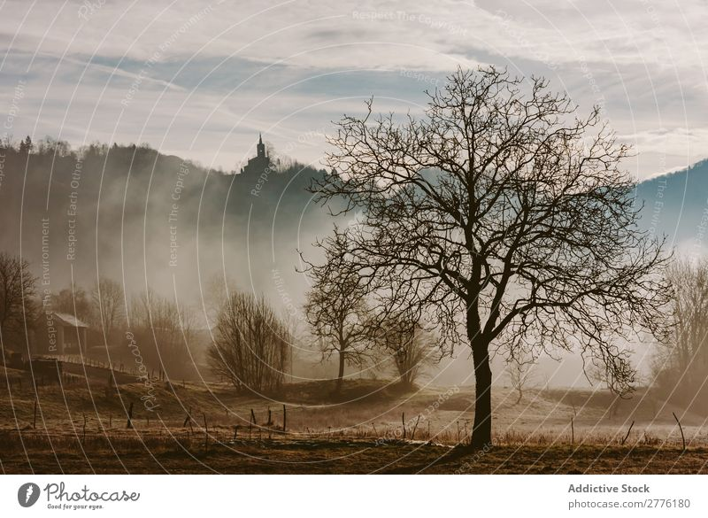 Dry tree in misty woods Tree Autumn Meadow Fog Landscape Nature Seasons Morning Sunlight Forest Dried Vantage point scenery Beautiful Environment Natural Rural
