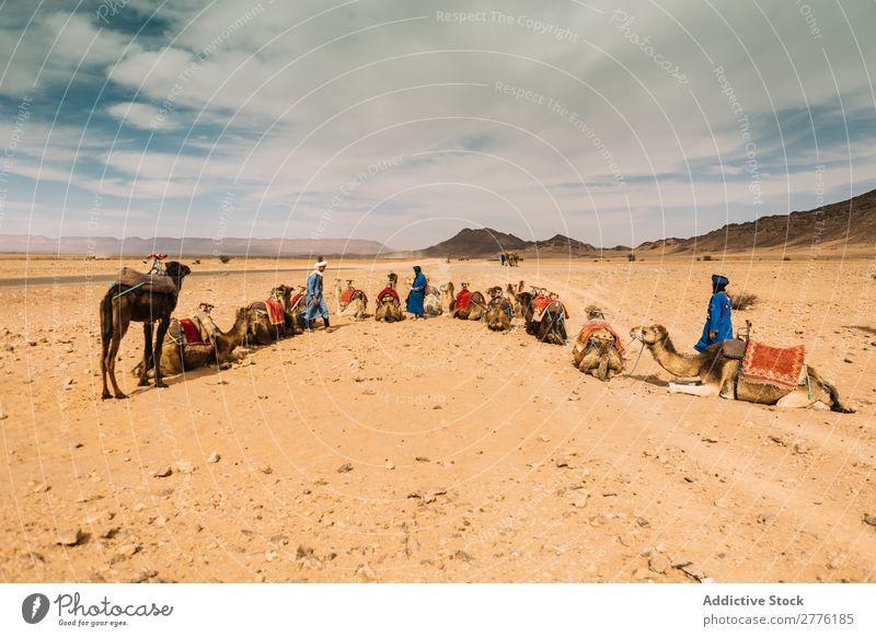 Caravan in spacious desert Desert Camel Indigenous Tourism Nature Transport Trip Summer Sand Vacation & Travel Tourist Animal Group Safari Sunbeam Authentic