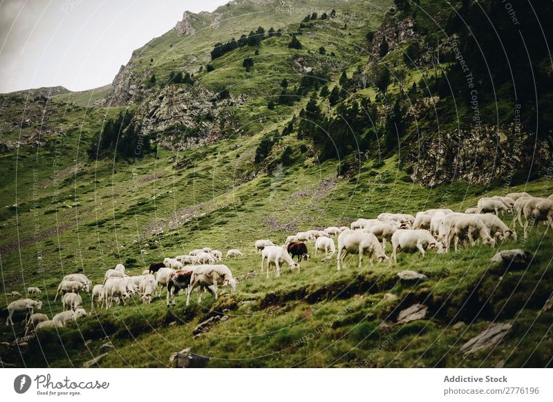 Sheep?in green mountains Pasture Mountain Green Grass Clouds Sky Nature Vantage point Hiking Alpine Hill Peak Height Panorama (Format) Beautiful Cold Top Purity
