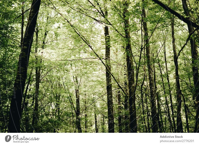A green forest Forest Green Deserted Tree Nature Landscape Plant