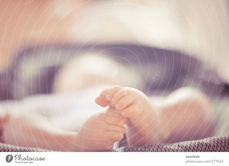 sweet feet Child Baby Infancy Skin Legs Feet 1 Human being 0 - 12 months Touch Movement Cute Life Toes baby feet New Colour photo Subdued colour Interior shot
