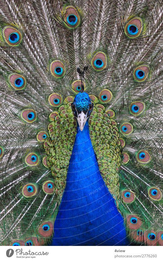 Animal Environment Bird Wild animal Pet
