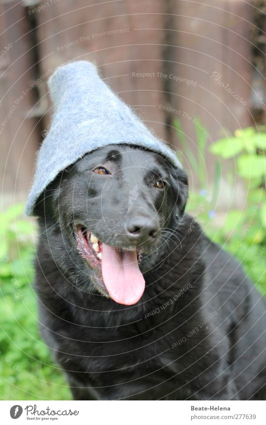 Dog Green Black Forest Gray Friendship Contentment Pink Wait Esthetic Trust Hat Whimsical Clearing Puppydog eyes Dog's head