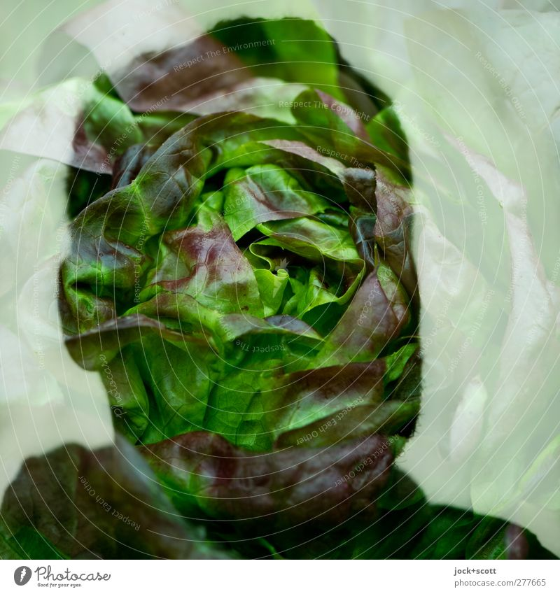 Butterhead Food Lettuce Nutrition Head 30 - 45 years Think Exceptional Fresh Green Emotions Identity Surrealism Irritation Double exposure Illusion Comic