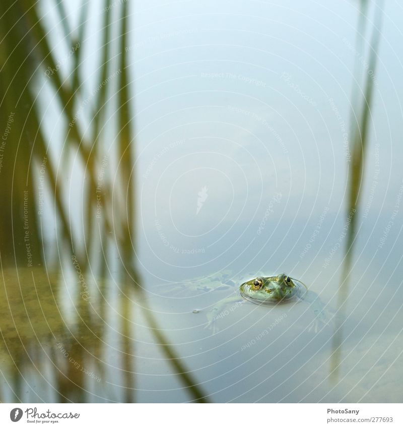 Nature Green Animal Cool (slang) Serene Frog Pond