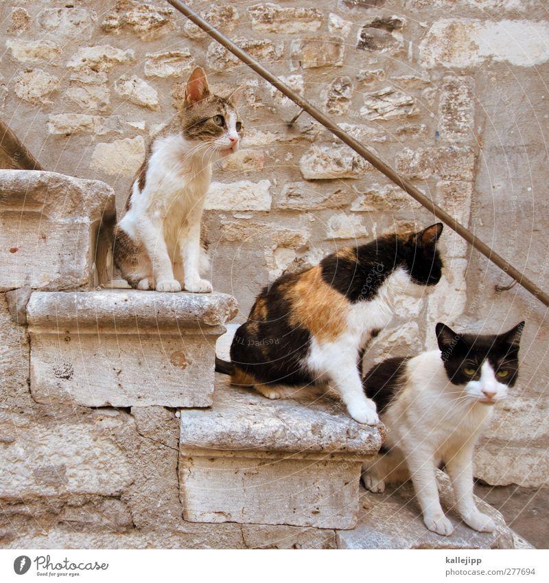Cat Animal Sit Stairs Group of animals Croatia Pet