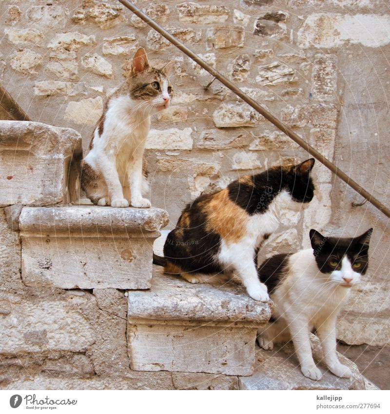 the three tenors Stairs Animal Pet Cat 3 Group of animals Looking Sit Croatia Colour photo Subdued colour Exterior shot Light Shadow Contrast Animal portrait