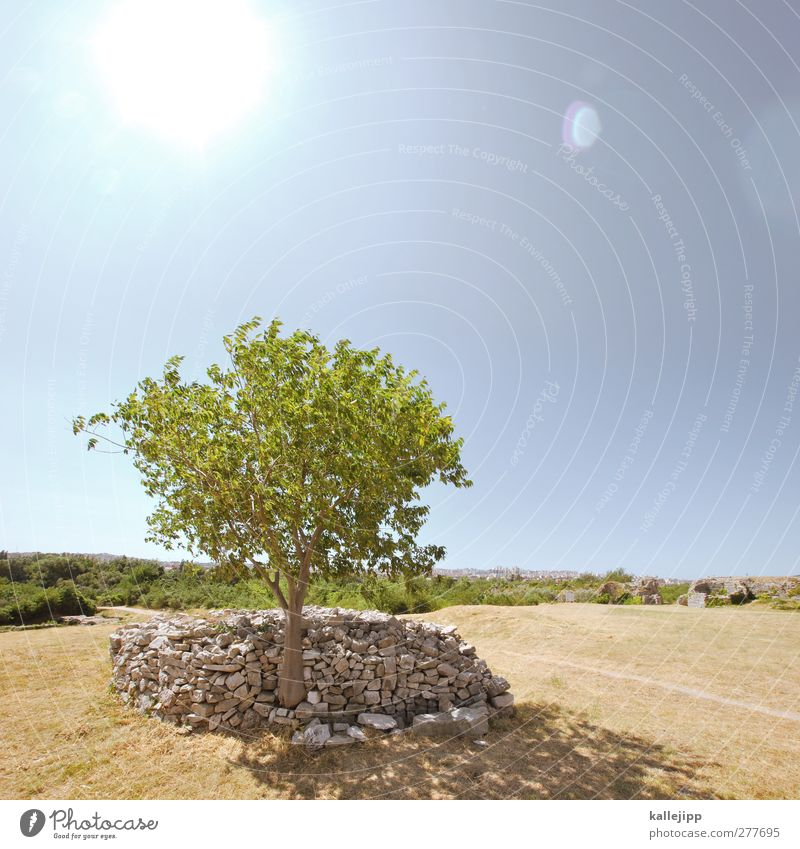 Sky Nature Green Tree Calm Landscape Far-off places Warmth Horizon Beautiful weather Croatia Cloudless sky Sustainability Stone wall Pile of stones