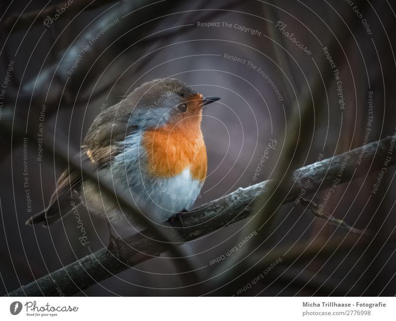 Nature Blue White Animal Black Eyes Natural Orange Bird Illuminate Glittering Wild animal Sit Feather Bushes Beautiful weather
