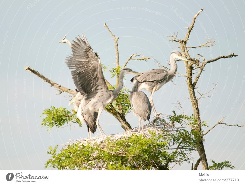 Nature Blue Green Tree Animal Baby animal Environment Movement Natural Bird Together Wild animal Stand Wing Group of animals Treetop