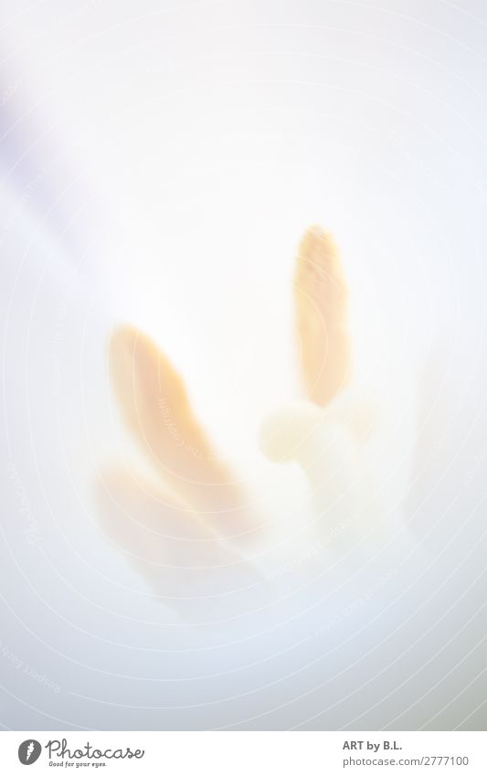 insides Nature Plant Flower Observe Touch Faded Thin Simple Elegant Eroticism Soft Yellow White Experience Expectation Emotions Colour photo Subdued colour